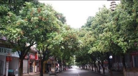街道两边树的图片
