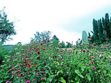 昆明世界蝴蝶生态园地址:昆明市西山区碧鸡镇黑荞母村(高海高速西华街