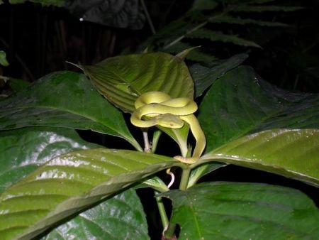 一片绿叶话版纳 曼点热带雨林里的真实写照