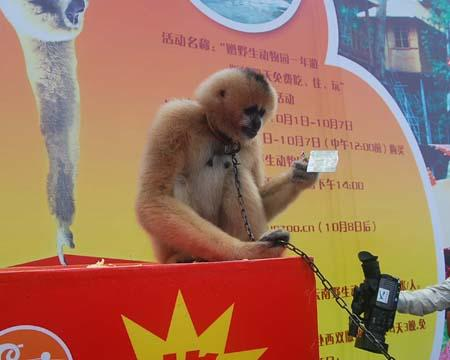 十·一购野生动物园门票