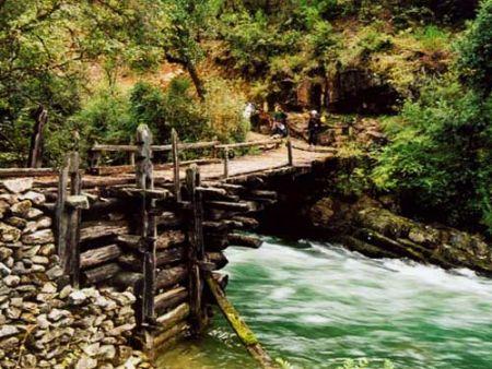 小桥流水森林简笔画分享展示