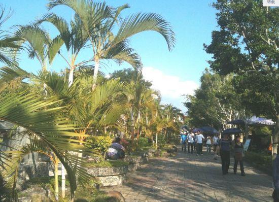 热带大树图片大全