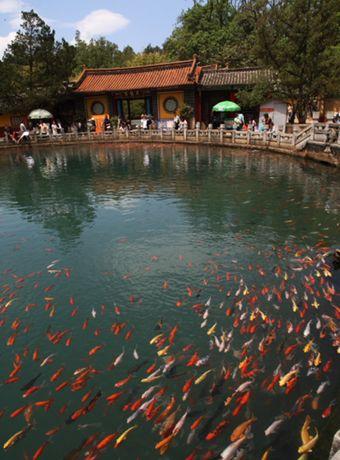 昆明黑龙潭公园赏鱼