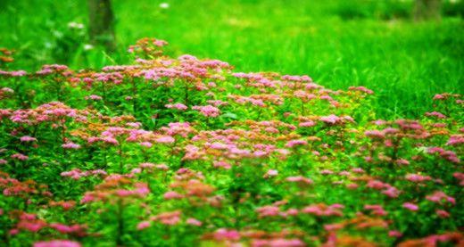 春天里:春光灿烂百花会, 我和春天有约会.