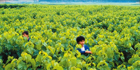 曲靖加大农业发展图片
