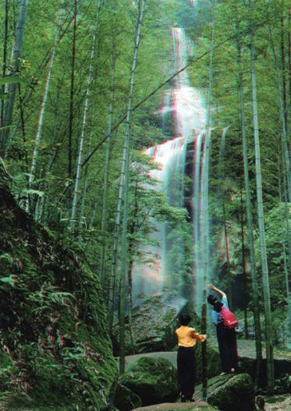 手机动态壁纸竹林山水