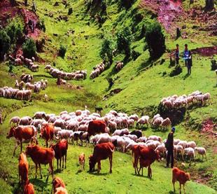 迪庆处处是风景 兰坪罗古箐充满想象力_景区推荐_旅游