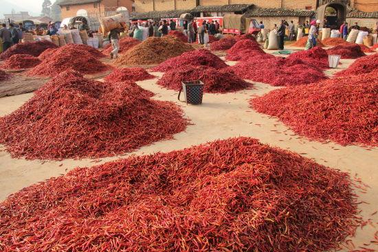 孰不知除了风景秀丽的普者黑风景区之外,丘北辣椒的种植,贩卖,云南