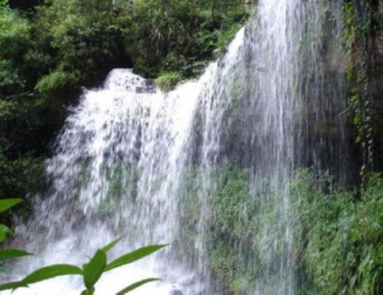 紫溪山野生植物资源十分丰富,森林覆盖率94.8%,是滇中高原地区典型的地带性原始植被,其生物多样性丰富、森林景观类型多样,古树名木众多,珍稀濒危保护植物繁多,珍奇花卉广为分布,百余种飞禽走兽出入林间,是一个天然的植物王国和物种宝库。紫溪山一年四季青山绿水,鲜花盛开,云南八大名花:茶花、兰花、杜鹃、木兰、百合、龙胆、报春、绿绒蒿。除绿绒蒿外,其余七种在紫溪山均有分布。紫溪山是云南野生山茶的重要种源地之一,分布广、母树多、花奇特,几乎为原始的垂直分布。主要野生种有云南野山茶、红花油茶、毛果山茶、富民山茶、