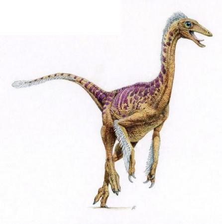 恐龙:顾氏小盗龙有四翼-小盗龙大图 史前公园 小盗龙的介绍图片