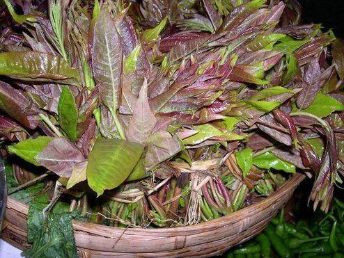 楝科香椿,属植物香椿树的嫩芽叶