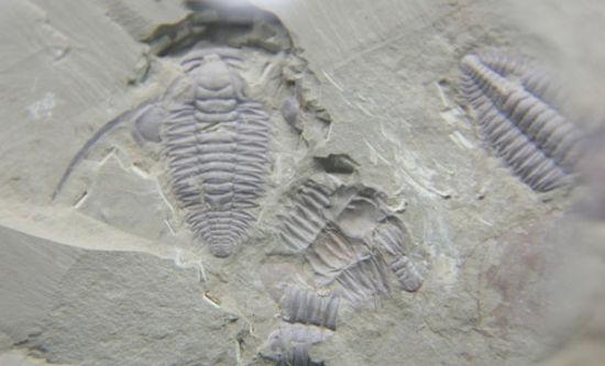 3亿年的澄江动物化石群发现后
