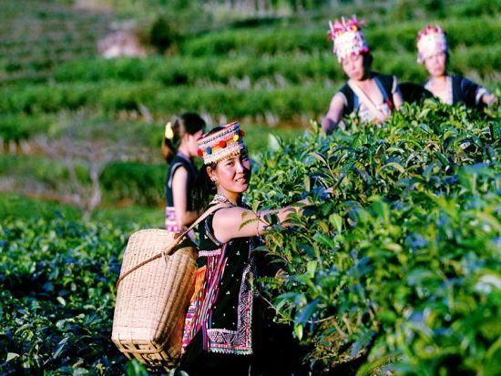 拉祜族拉祜族祟拜祖先,对丧葬很重视.本民族传统的葬法是...