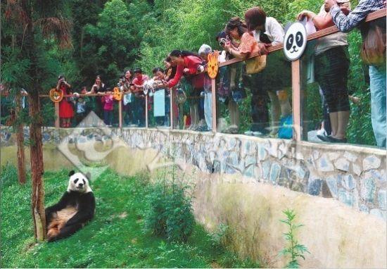 昨日,近万市民来到云南野生动物园,参加大熊猫芊芊的告别会,给芊芊送