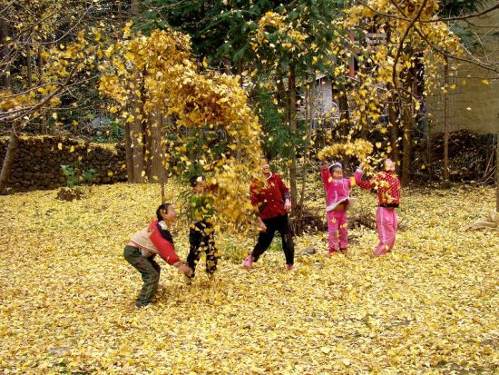秋天的颜色 腾冲银杏村