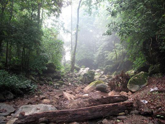 勐远热带雨林