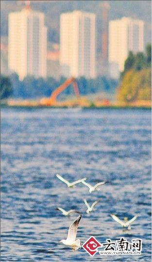 滇池保护区内禁建工业园区和开发房地产项目 江洋 摄