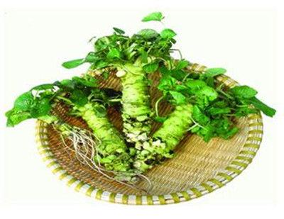 芥末图片植物图片