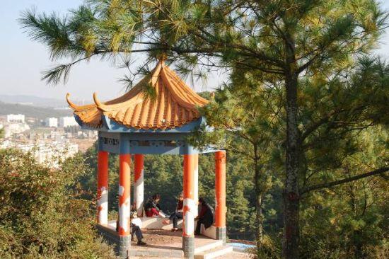 马龙沈家山森林公园分享展示