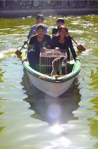 云南野生动物园终于表态,决定将现有的天鹅湖岛改建成狐猴岛,并进行