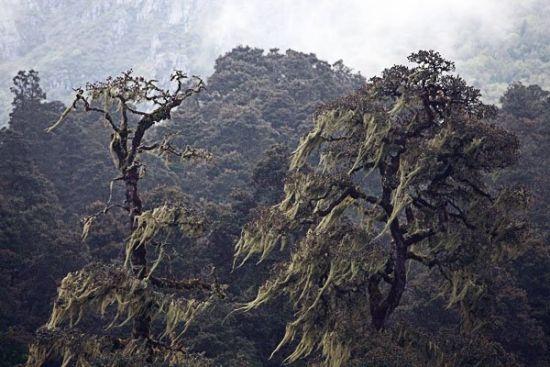 徒步途中的高海拔原始森林