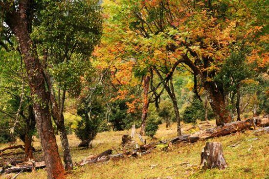 丽江波多罗的秋色