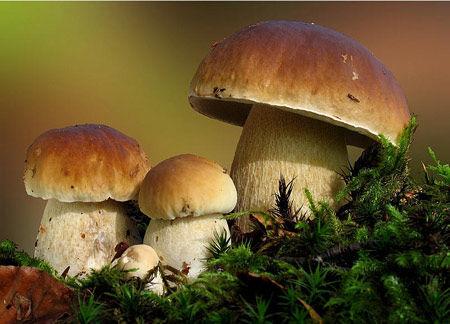 在野生菌王国品菌图片