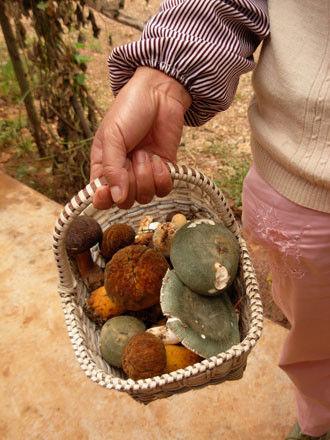 野生菌(图片来源:中国日报网)