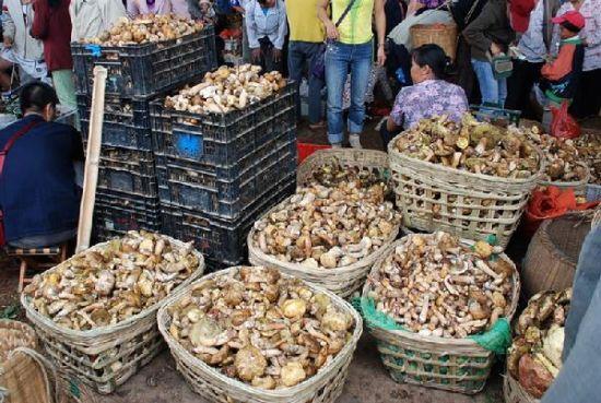 野生菌交易(图片来源:易门新闻网)