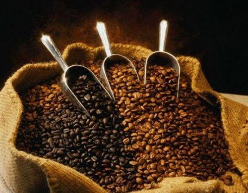 小粒咖啡(图片来源:丽江滇马户外)