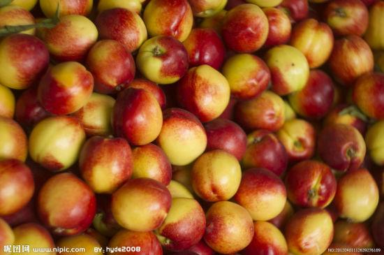 油桃(图片来源:昵图网)