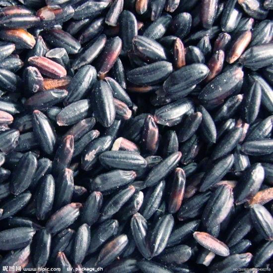 紫米(图片来源:昵图网)