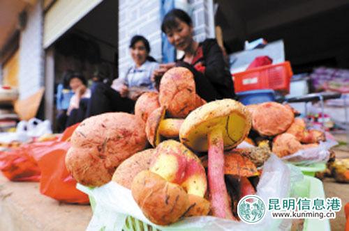 云南各种野生菌。记者杨海冬 张玉杰\摄