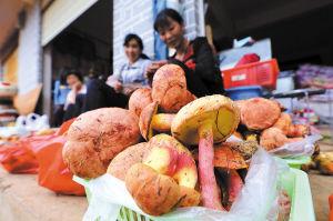 彩的民族文化和丰富的美食是昆明发展避暑游的得力武器 ■ 都市时报记者 杨海冬 张玉杰
