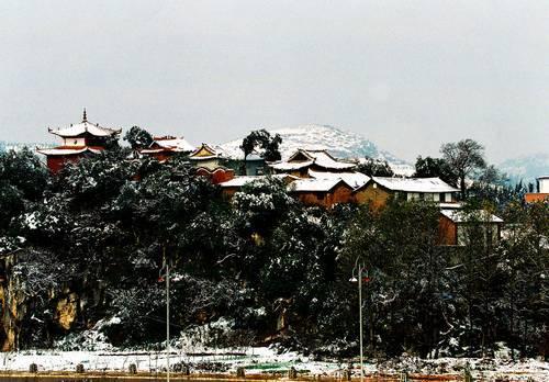 雪后的桃笑玄天