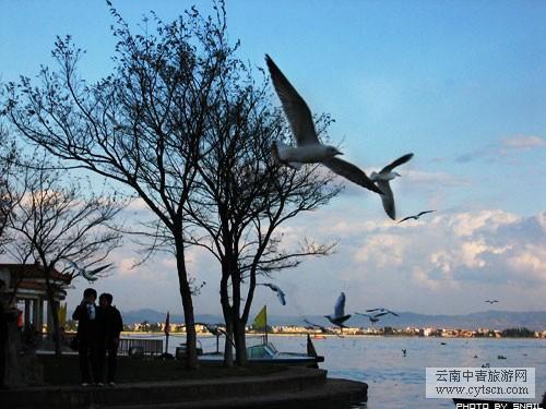 海边垂柳风景图片
